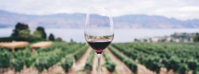 Het Kroatische Dalmatië is de uitgelezen plek voor een wijnreis in combinatie met zeilen